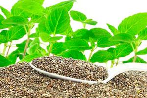 Beneficios de las semillas de chía